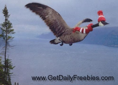 Goose Flying for Winter