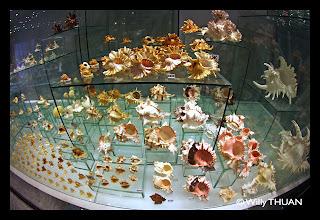 Phuket Shell Museum