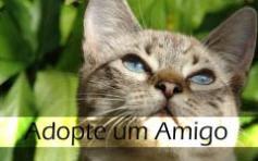 Adopção