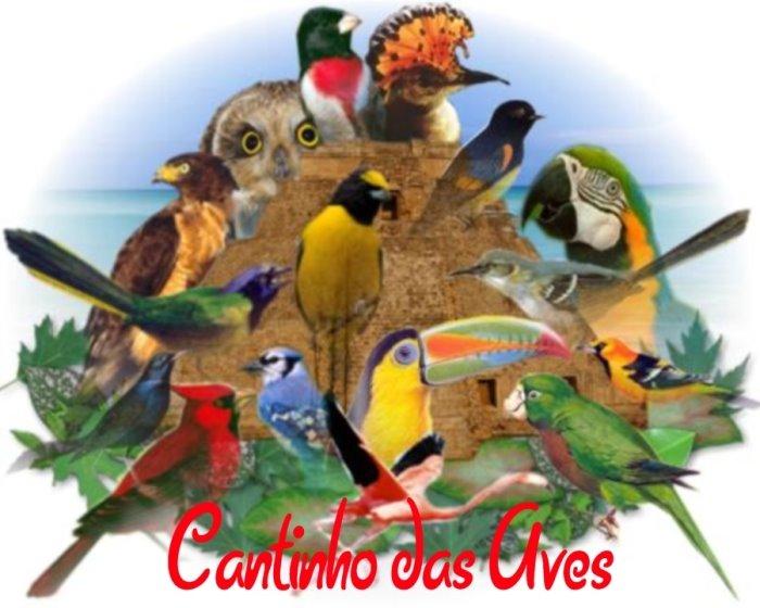 Arlequim Portuquês