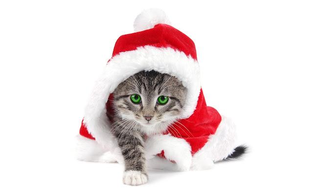 gatos para o natal