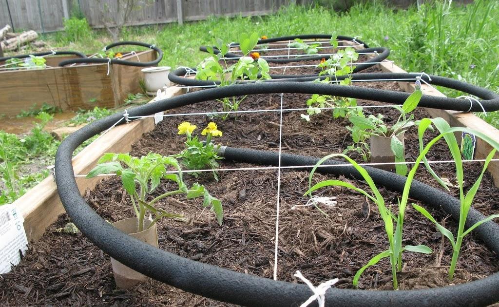 Biologie My Veggie Garden Attempt Two