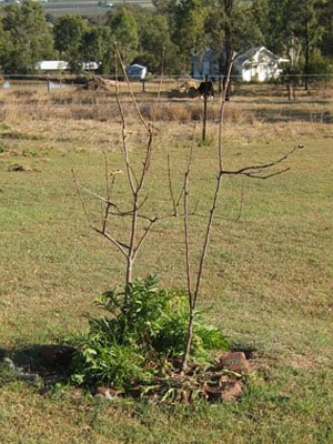 Apple Trees: One Year