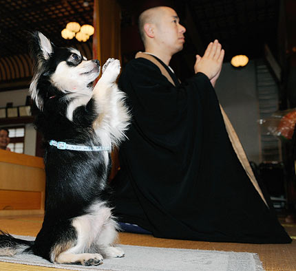 [praying+dog]