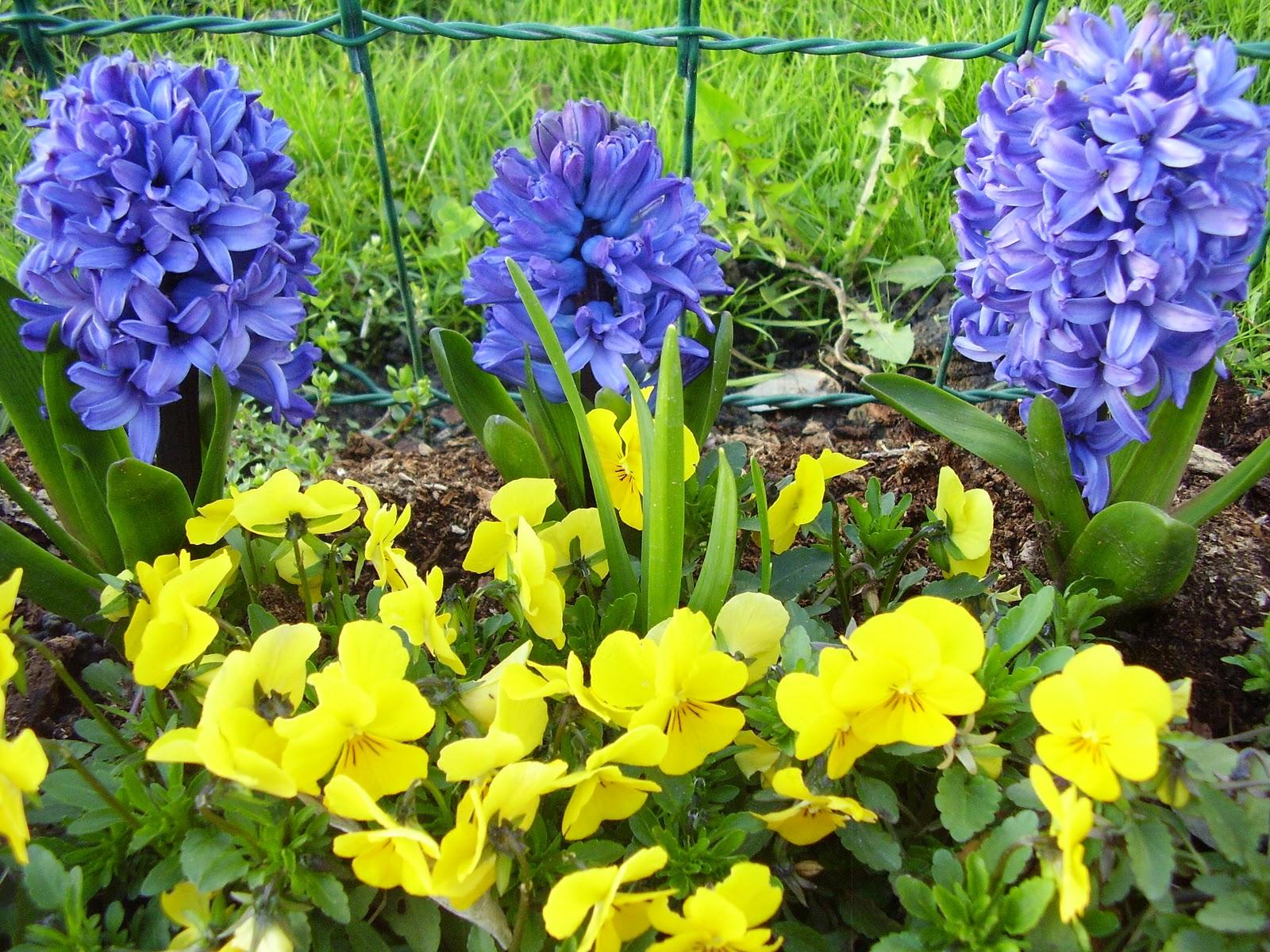 Handmade with love: Proljetno cvijeće moje okućnice