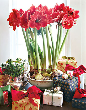 The jewel box home winter decorating on a budget for Amaryllis christmas decoration