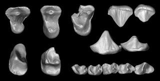 Un nuevo primate complica la comprensión de la evolución. Foto: ERIK SEIFFERT
