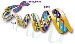 ¿Qué es el genoma?