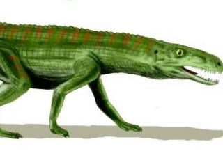 Ilustración de una especie de crurotarsan, el Gracilisuchus stipanicorum. Arthur Weasley