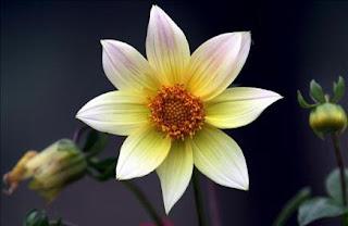 Descubierto el mecanismo que da lugar al proceso de formación de las flores