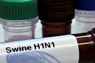 En busca del origen de la gripe porcina. AFP