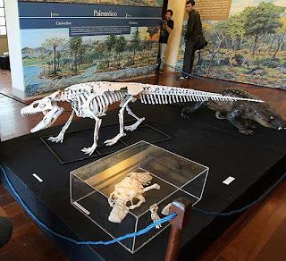Fósiles y reconstrucciones del esqueleto y del animal vivo. Efe