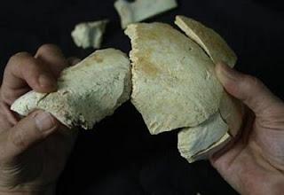 Cráneo 17, encontrado en la Sima de los Huesos. Javier Trueba