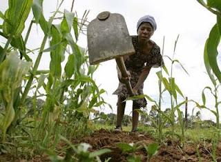 El inicio de la agricultura pudo contribuir al calentamiento global