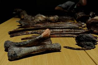 Aardonyx Celestae. ALEXANDER JOE | AFP