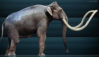 Las lluvias descubren los restos de un mamut de hace 10.000 años