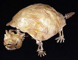 Seres humanos causaron la extinción de las tortugas gigantes