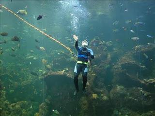 El calentamiento del océano destruye el 60 por ciento del coral en Indonesia