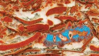 Pimitivas esponjas que poblaron los océanos hace 650 millones de años