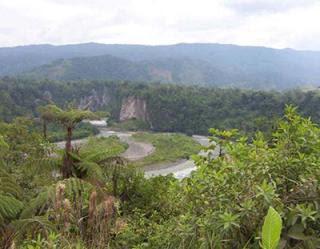 Parque Natural Yasuní