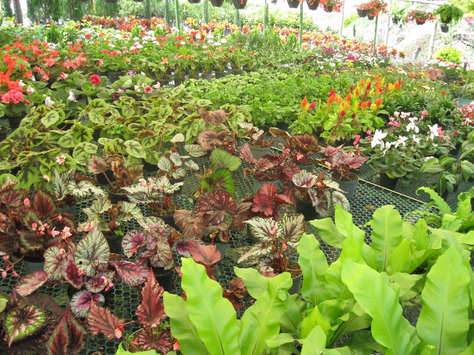 Vivero a j un consejo for Viveros plantas ornamentales colombia