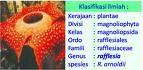 Bunga Indonesia