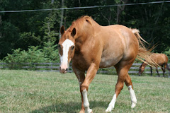 My Horse Sonny