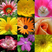 Época das flores