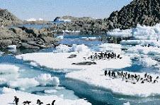 Por falta de hielo los pinguinos de la Antartida estan muriendo