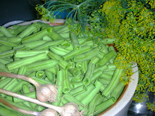 Fermenting Garlic and Dill Green Beans