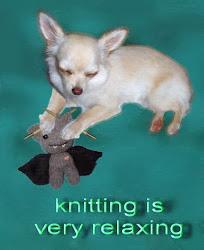 Knitting Chihuahua