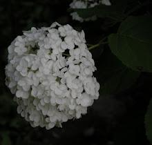 Black & White Flora & Fauna