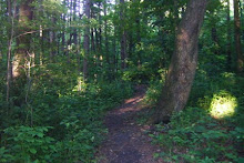 Path through the middle of Victoria Glen Park woods