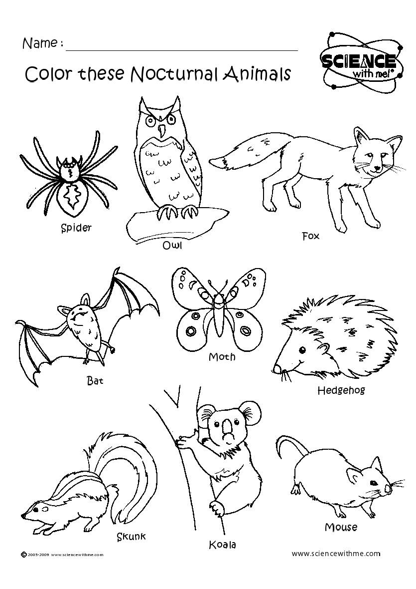 nocturnal animals coloring pages - photo#1