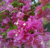 Uma de minhas flores favoritas