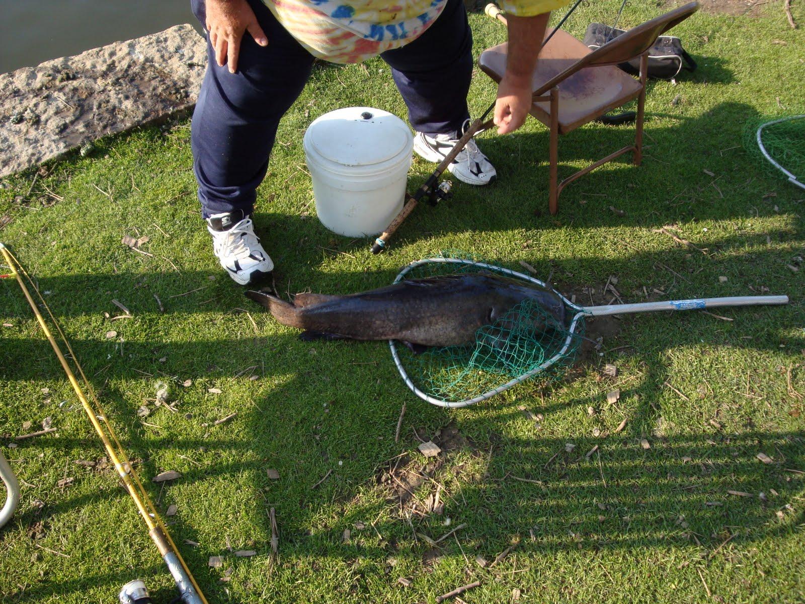 Lincoln park commons pond news kettering ohio fish for Koi pond kettering