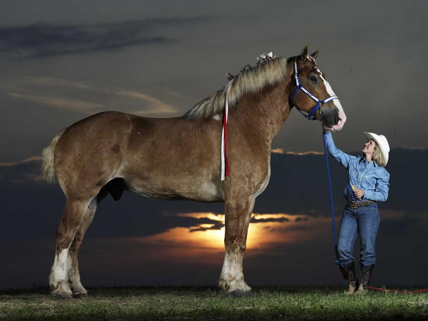 One of the smallest horse in the world and
