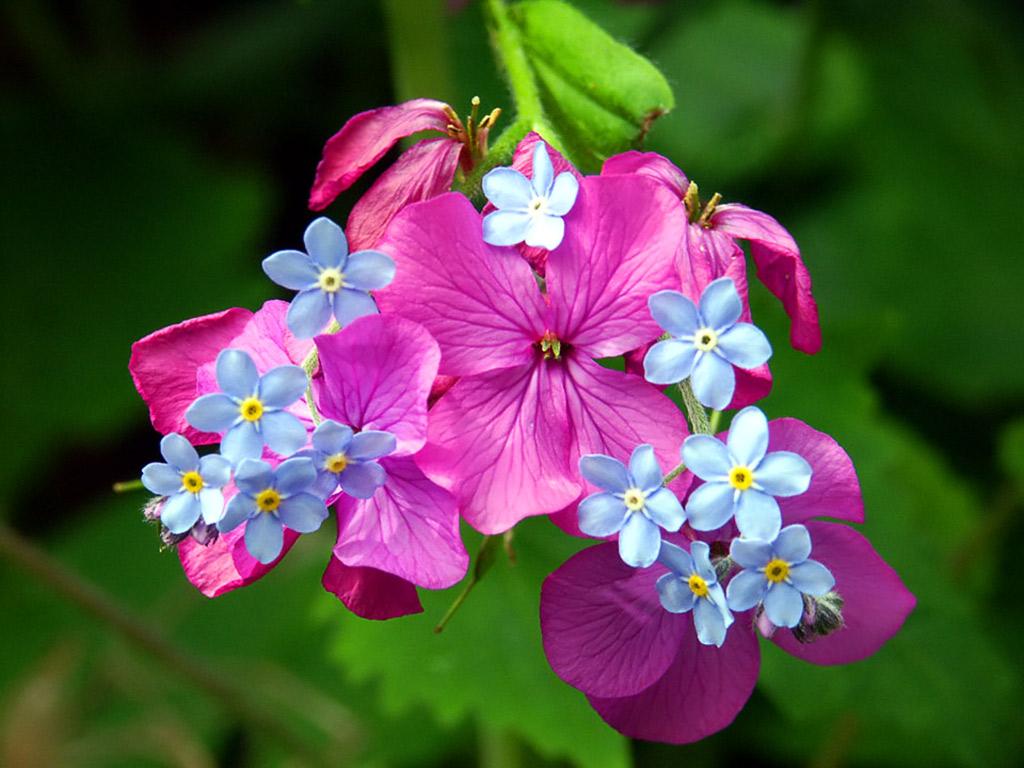 http://3.bp.blogspot.com/_D6V8KS70KD8/TJsjPMjpPaI/AAAAAAAACq8/iiGdh2O2nCg/s1600/Spring_Blossoms.jpg