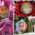 Sai Baba Took Care Of My Appraisal - Sai Devotee Seema