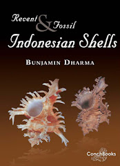Book of Indonesian Shells