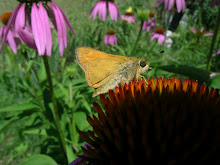Coneflower Occupant