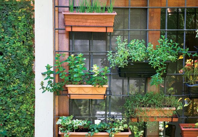 mini jardim de parede:estrutura de ferro da janela foi aproveitada par instalar os fvasos de