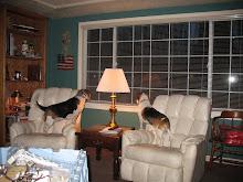 Beagle Alarm!
