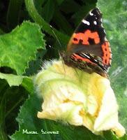 Mariposa de enero