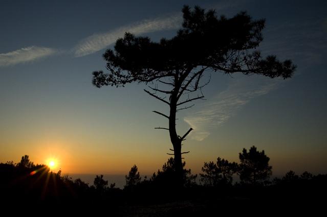 Agora uma silhueta no ocaso, amanhã a sombra que te acolhe do sol
