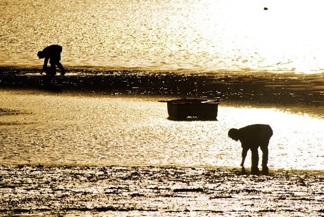 À cata dos tesouros que a maré deixou - Baía do Seixal
