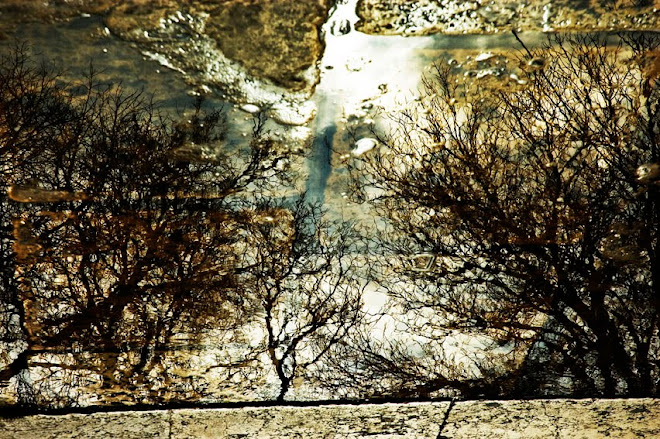 A Nudez do Inverno - Lisboa, Reflexos