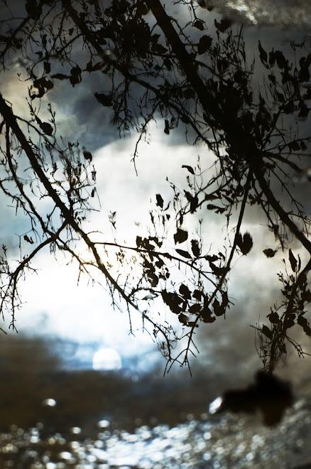 Reflexo de Inverno ou a magia de uma poça de água 1 - Baía do Seixal