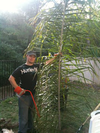 Drew and His Palm Tree