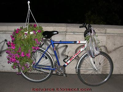 atrix, Nagy Magyarország, virág, bringaút,  kerékpár, rakpart, Buda